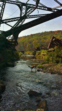 Took the pup under the ruins of the Kinzua Bridge
