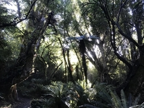 Took this picture during my hike through Stewart Island New Zealand