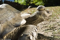 Tortoise with her  day old son