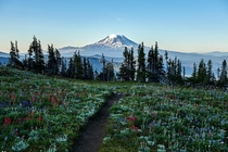 Towards Mt Adams on the Pacific Crest Trail Goat Rocks Wilderness WA