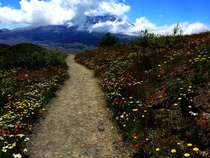 Trail at Mt St Helens yesterday hastily taken on my iPhone during a wonderful hike with my daughter  x