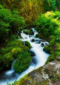 Trail to fairy falls alongside Wakeena creek Columbia River Gorge Oregon
