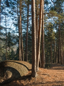 Tranquil morning under pines Nature reserve Stolby Siberia