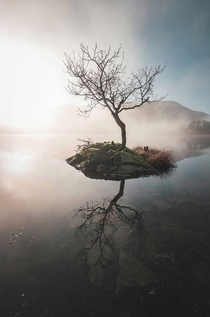 Tranquil Tree the Lake District England
