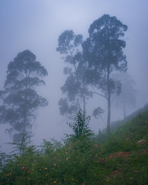Tranquility In the misty mountains of Kodaikanal Tamil Nadu India