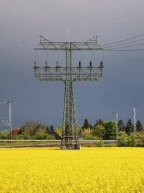 Transmission tower in the canola field Germany