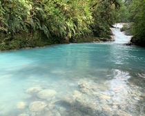 Travelled to Costa Rica recently and didnt go to a single beach Instead took a road trip around the country In the mountains of Sarchi we were awestruck by the brilliant blue waters of a nearby waterfall The contrast between the forest and river is amazin