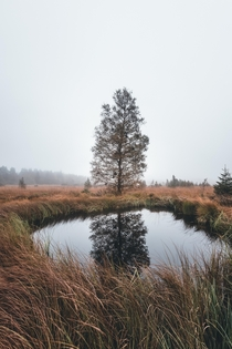 Tree and pond in the Belgian High Fens OC  x  IG tristanjcbs
