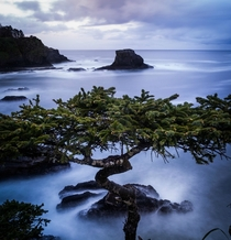 Tree at Cape Flattery Washington State