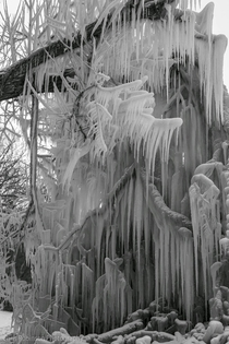 Tree branch covered in icicles  Webster New York