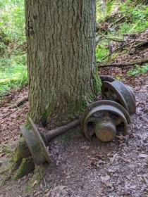 Tree growing around old coal cart axle