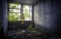 Tree growing in a room at the Polissya hotel in Pripyat Ukraine