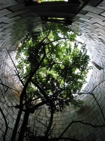 Tree growing in a silo in Michigan