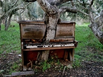 Tree growing through an abandoned piano x-post from rpics