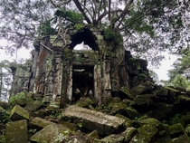 Tree grows from the ruins of Beng Mealea near Angkor Cambodia