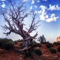 Tree in Capitol Reef Natl Park