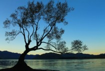 Tree Island on Lake Wanaka Otago New Zealand