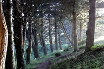 tree lined path Mendocino California