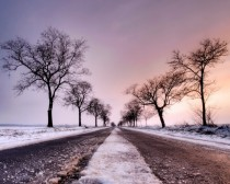 Tree lined road in the winter