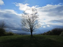 Tree on a hill - beautiful and unedited -