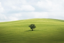 Tree on a hill in Tuscany Italy x