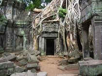 Tree roots growing over stone structure India