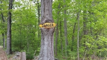 Tree swallowing a danger sign  x-post rphotoshopbattles