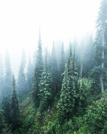 Trees shrouded in endless cloud and fog Shot on Whistler Mountain in British Columbia Canada  Social mikemarkov