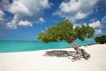 Tropical Paradise - Eagle Beach Aruba