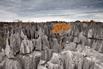 Tsing de Bemaraha - one of the newest parks in Madagascar  photo by Alexei Suloev