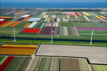 Tulip Fields x-post from rpics