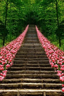 Tulip lined staircase in Kyoto Japan