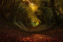 Tunnel of Trees in Halnaker England - Photo by Finn Hopson