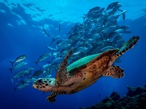 Turtle photo by Matt Lasky