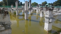 Two plastic ducks bob calmly among the quake-ravaged waterlogged foundations  Christchurch NZ