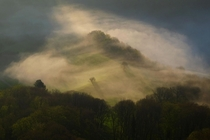 Two trees on a hill during a misty sunrise Jura Mountains Switzerland OC x