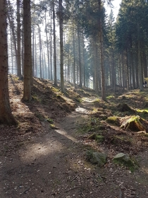 Tyrebagger Forest Aberdeenshire The way the suns cut though the mist on this day was flawless Post