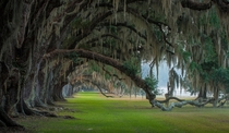 Under the Oaks - Tomotley Plantation South Carolina  photo by Tony DelSignore