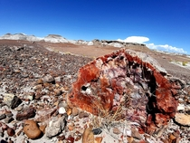 Underrated Petrified Forest National Park USA