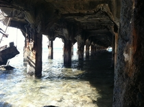 Underside of the Mala Wharf located in Lahaina Maui Built in  with the purpose of loading and unloading goods and passengers aboard steamships Now a popular dive spot for locals and tourists