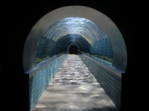 Underwater Viewing Tunnel - Colchester Zoo UK