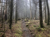 Unedited photo I took from my Appalachian Trail thru-hike this year Great Smoky Mountains National Park Tennessee