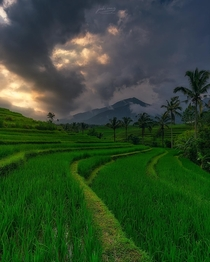 UNESCO rice terrace Bali Indonesia OC  jabisanz