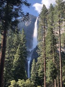 Upper and lower Yosemite falls peeking through the trees Yosemite National Park   x
