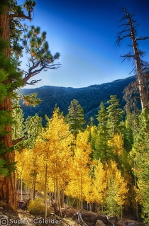 Upper Bristlecone Trail Mt Charleston NV -- Las Vegas can do fall too