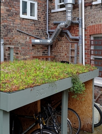 Urban garden on top of bike garage