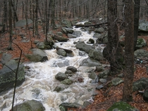 Usually just a sleepy creek in Central Virginia this is what  days of rain turns it into eye candy