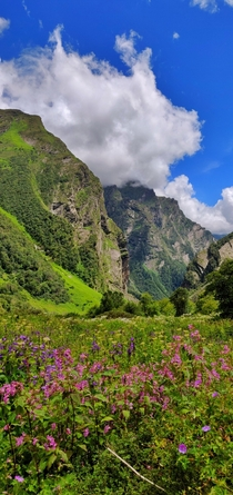 Valley of Flowers National Park India