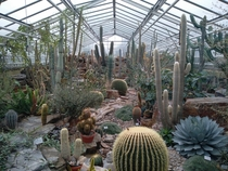 Various cacti in greenhouse