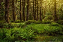 Verde Grove - the Hoh Rainforest in Olympic National Park Washington  by Howard Snyder